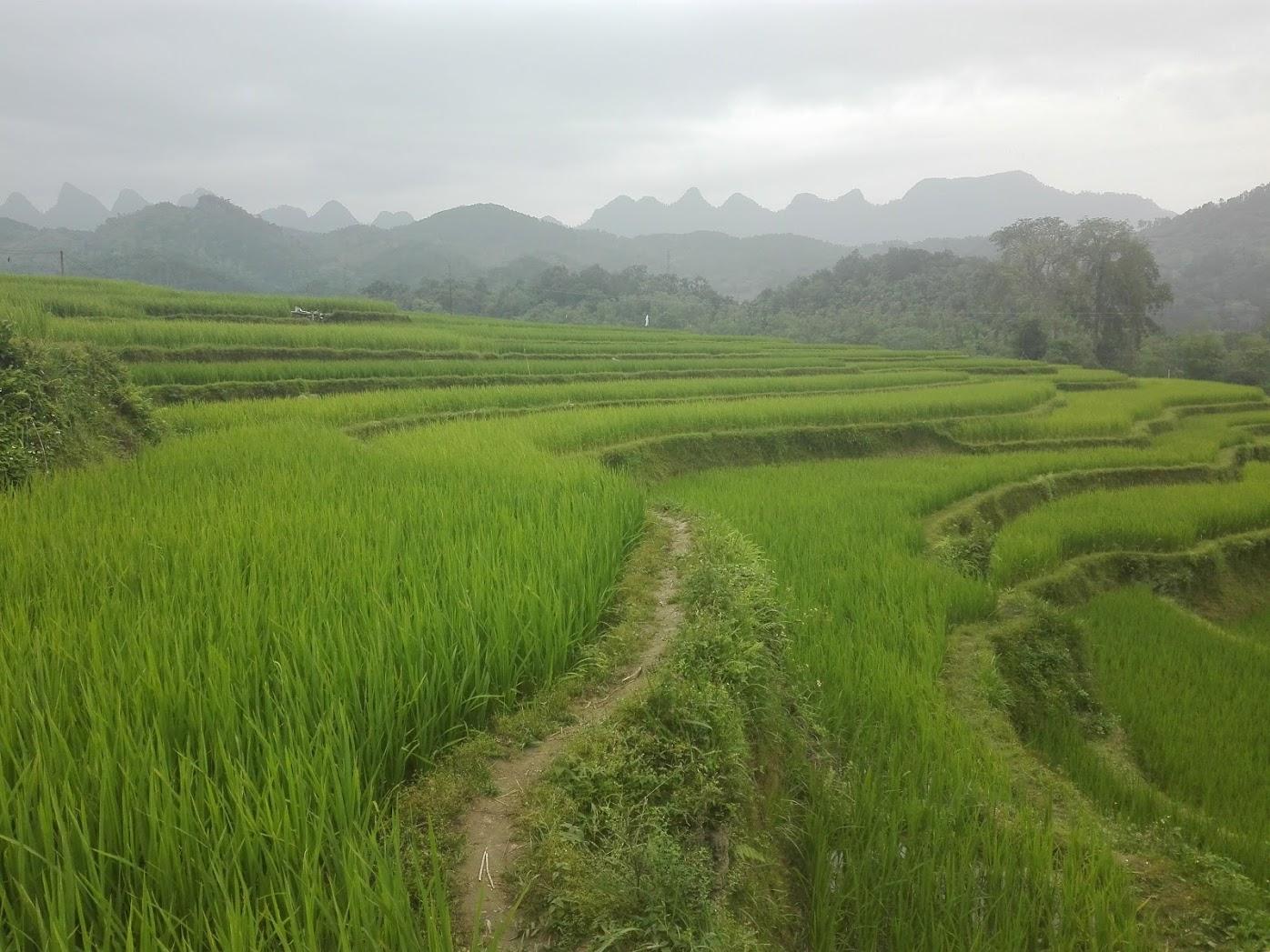 tarasy ryżowe, Wietnam