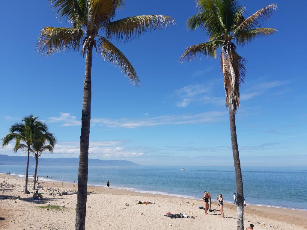 Puerto Vallarta Meksyk rajska plaża i palmy