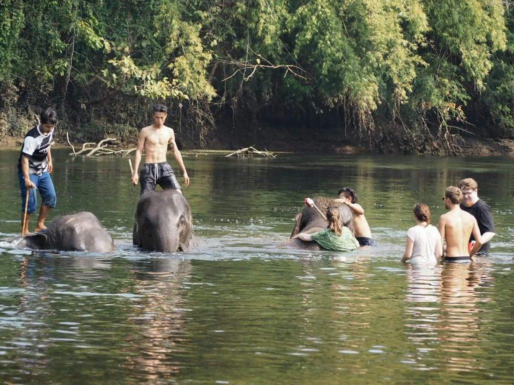 słonie Tajlandia Kwae Yai rzeka
